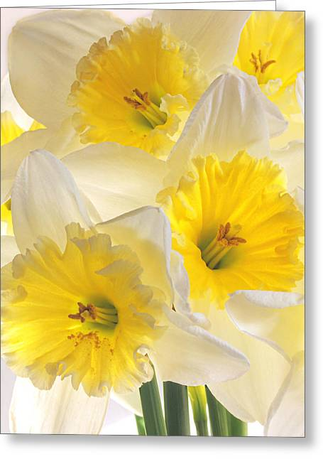 Love Image Greeting Cards - Daffodil Delight Vertical Greeting Card by Gill Billington