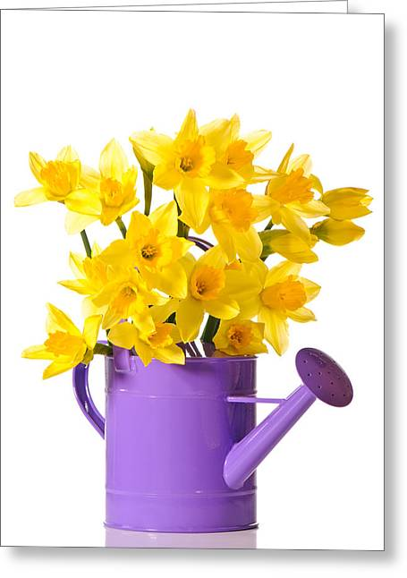 Watering Can Greeting Cards - Daffodil Display Greeting Card by Amanda And Christopher Elwell