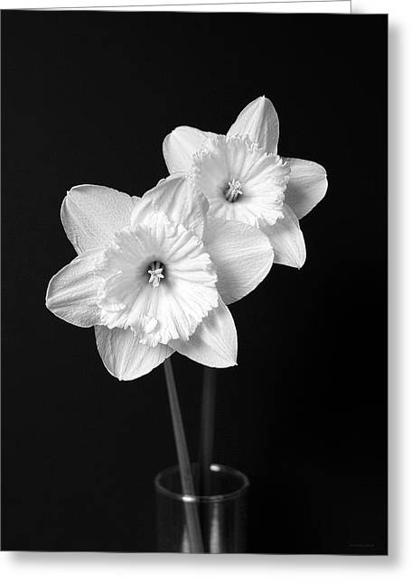 Daffodil Greeting Cards - Daffodil Flowers Black and White Greeting Card by Jennie Marie Schell