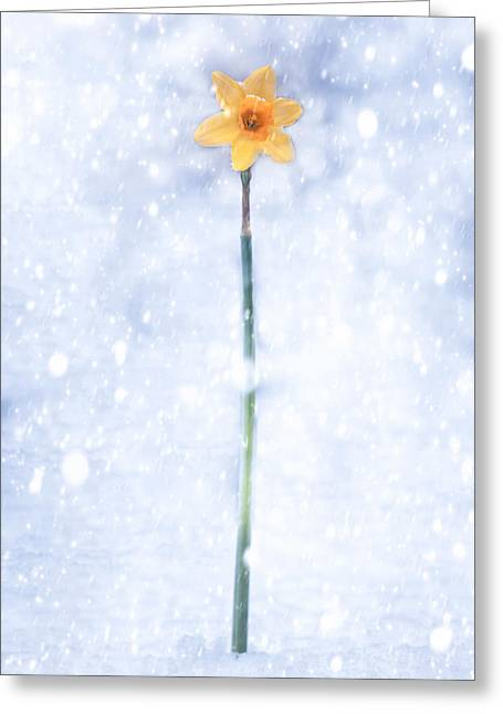 Sowing Greeting Cards - Daffodil In Snow Greeting Card by Joana Kruse