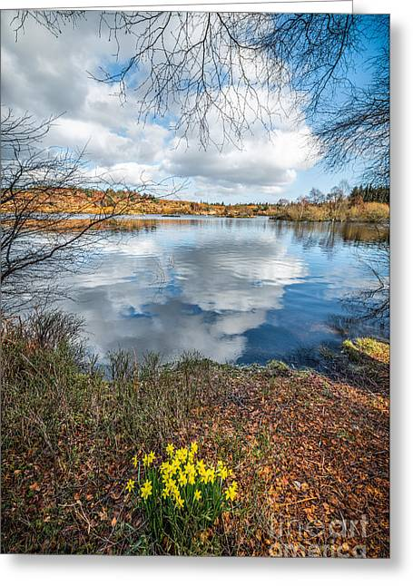 Moss Digital Art Greeting Cards - Daffodil Lake Greeting Card by Adrian Evans