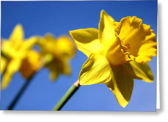 Best Flower Images Greeting Cards - Daffodil Line Greeting Card by Sarah OToole