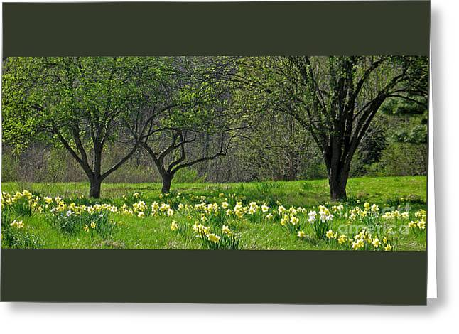 Daffodil Meadow Greeting Card by Ann Horn