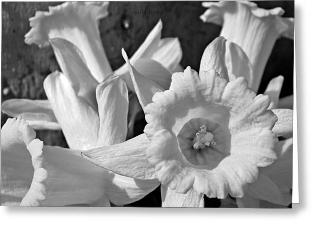 Daffodil Monochrome Study Greeting Card by Chris Berry
