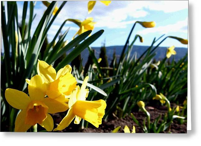 Decorative. Country Greeting Cards - Daffodil Painting Greeting Card by Will Borden