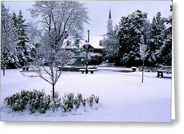 DAFFODIL SNOW Greeting Card by Skip Willits