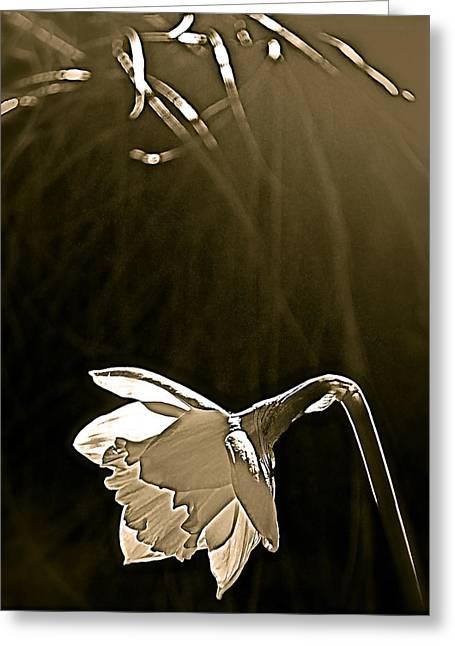 Daffodils 2 Greeting Card by Pamela Cooper