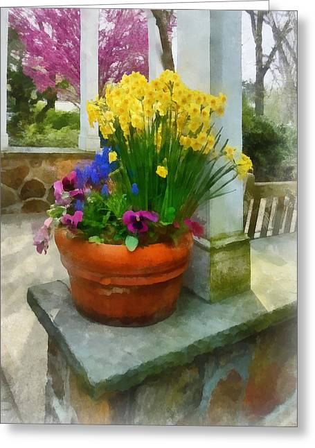 Flowering Trees Greeting Cards - Daffodils and Pansies in Flowerpot Greeting Card by Susan Savad