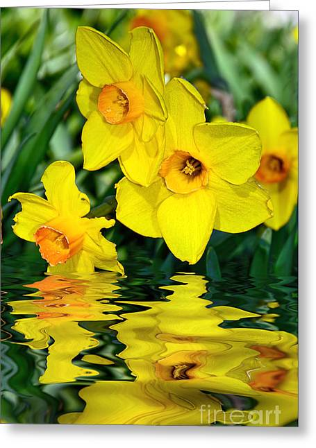 Long Leaves Greeting Cards - Daffodils by the Lake Greeting Card by Kaye Menner