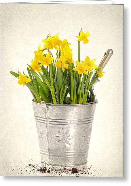 Gardening Tools Greeting Cards - Daffodils Greeting Card by Amanda And Christopher Elwell