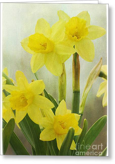 Cindi Ressler Greeting Cards - Daffodils Greeting Card by Cindi Ressler