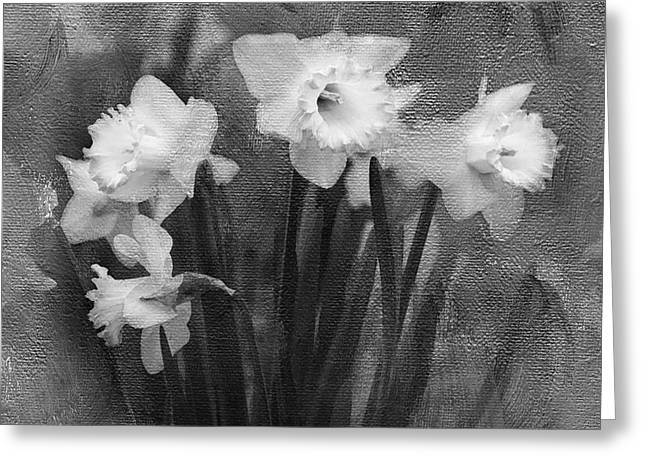 Daffodils Photographs Greeting Cards - Daffodils in Black and White Greeting Card by Betty LaRue