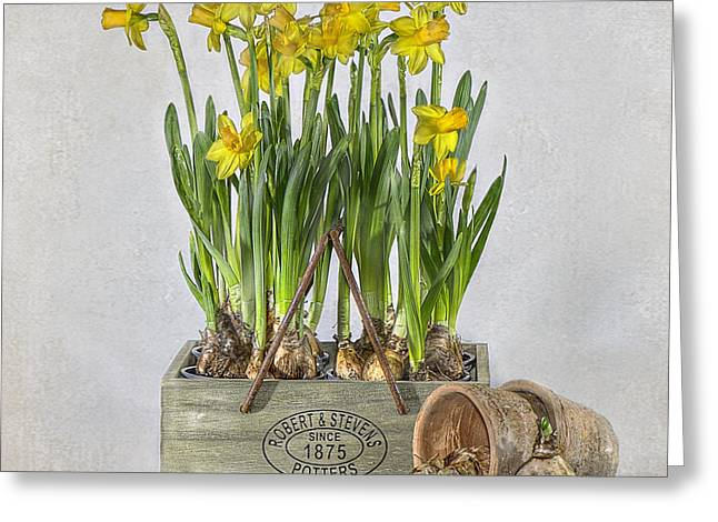 Spring Bulbs Greeting Cards - Daffodils Greeting Card by Jacky Parker
