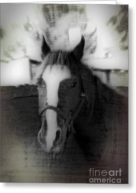 Owner Greeting Cards - Daguerreotype Horse Greeting Card by Michael Braham