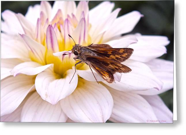 Moth Pyrography Greeting Cards - Dahlia Love  Greeting Card by Hannah Underhill