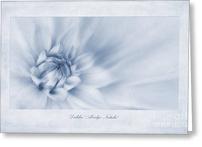 Dahlias Greeting Cards - Dahlia Abridge Natalie Cyanotype Greeting Card by John Edwards