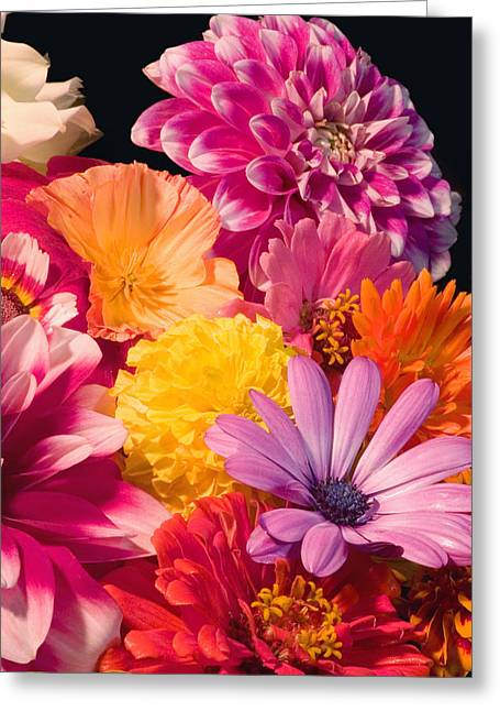 Dahlias Greeting Cards - Dahlia African Daisy Zinnia Flowers Greeting Card by Keith Webber Jr