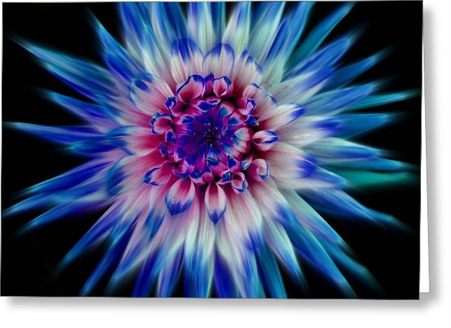 Creative Manipulation Greeting Cards - Dahlia-Blue Greeting Card by Paul Chessell