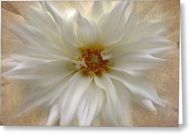 Burst Greeting Cards - Dahlia Burst Greeting Card by Angie Vogel