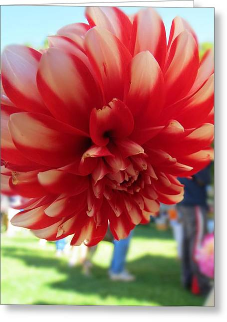 First-rate Greeting Cards - Dahlia Dahling Greeting Card by Anne Sterling