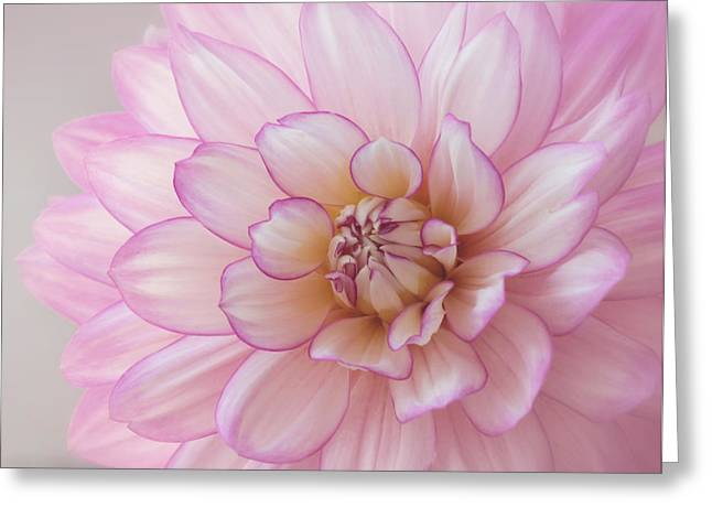 Kim Photographs Greeting Cards - Dahlia Dreams Greeting Card by Kim Hojnacki