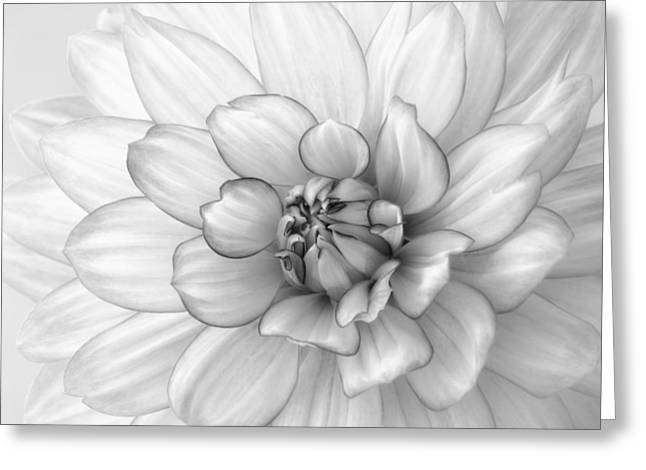 Dahlia Flower Black And White Greeting Card by Kim Hojnacki