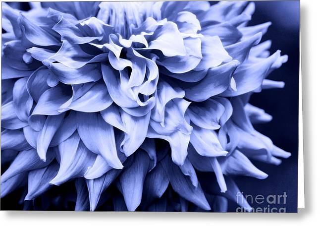 Dinner-plate Dahlia Greeting Cards - Dahlia in Blue Greeting Card by Deanna Wright