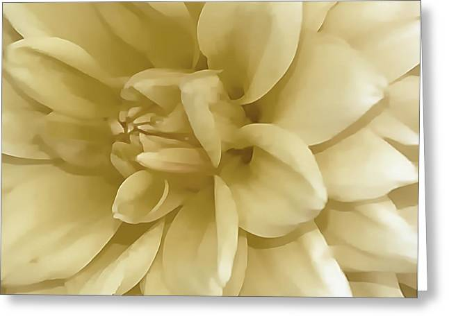 Struckle Greeting Cards - Dahlia In Ivory Greeting Card by Kathleen Struckle