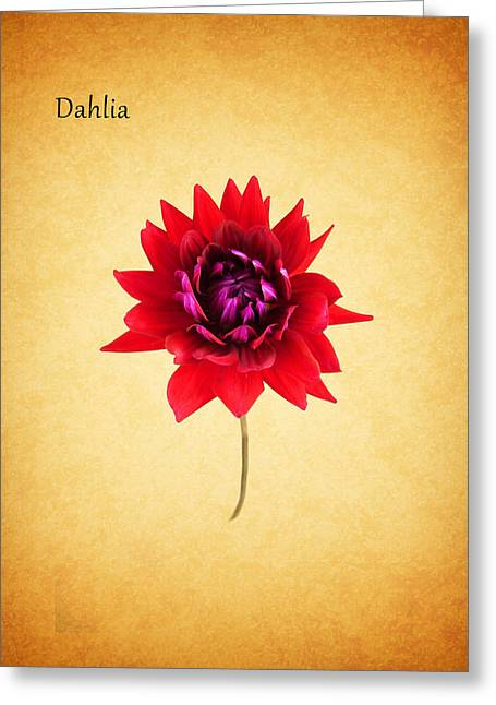 Dahlias Greeting Cards - Dahlia Greeting Card by Mark Rogan
