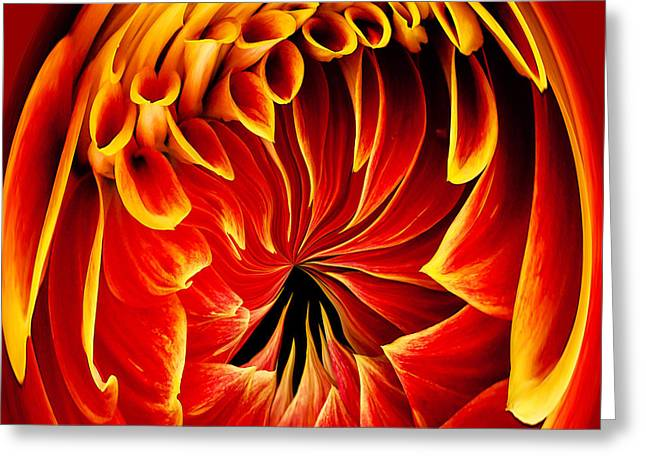 Swann Greeting Cards - Dahlia on Fire Greeting Card by Jean Noren