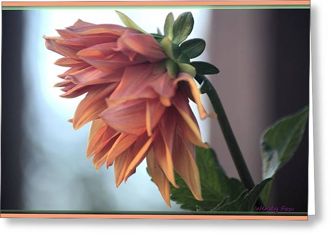 Dinner-plate Dahlia Greeting Cards - Dahlia Profile Greeting Card by Wendy Fox