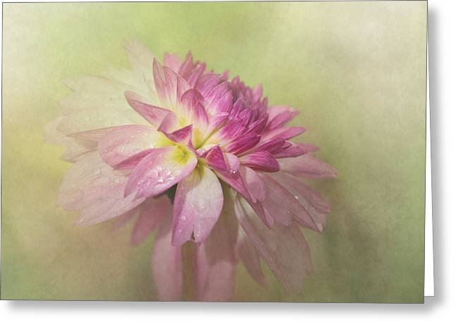 Enhanced Greeting Cards - Dahlia Refreshed Greeting Card by Angie Vogel