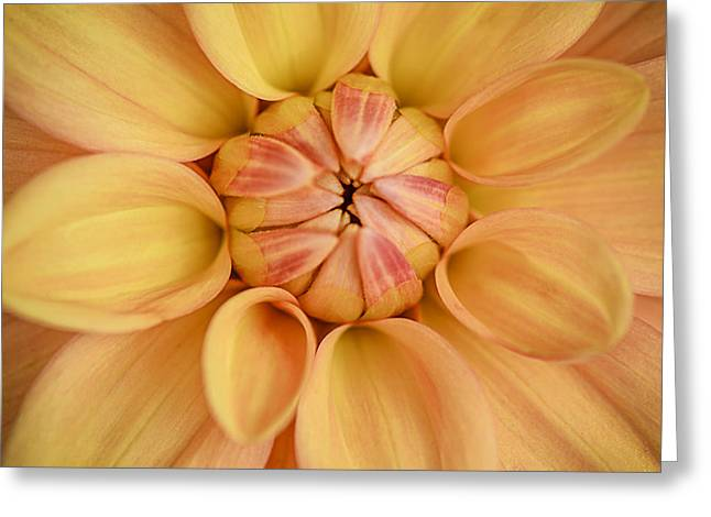 Julie Palencia Photography Greeting Cards - Dahlia Squared Greeting Card by Julie Palencia