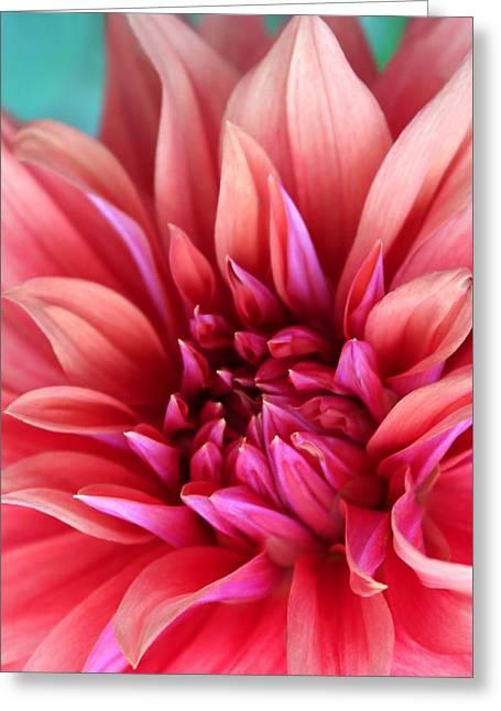 Fuschia Greeting Cards - Dahlia Greeting Card by  The Art Of Marilyn Ridoutt-Greene