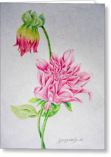 Pink Blossoms Drawings Greeting Cards - Dahlia Greeting Card by YongWoon Suh