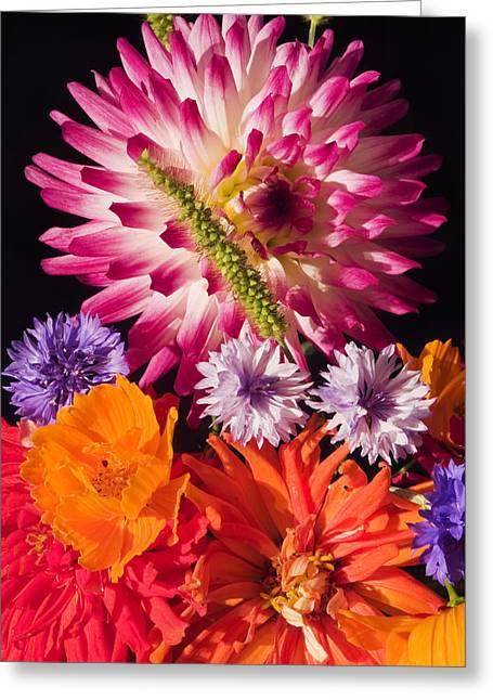Dahlias Greeting Cards - Dahlia Zinnia Bachelors Buttons Flowers Greeting Card by Keith Webber Jr