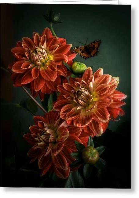 Photographs With Red. Greeting Cards - Dahlias Greeting Card by Hugo Bussen