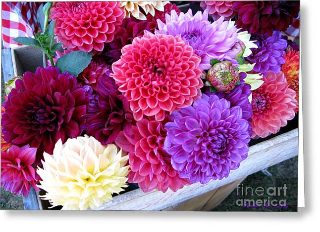 Best Sellers -  - Pinks And Purple Petals Greeting Cards - Dahlias Greeting Card by Kathie McCurdy