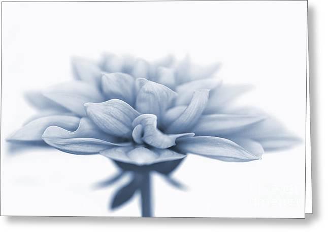 Bud Greeting Cards - Dahlietta Amy Cyanotype Greeting Card by John Edwards
