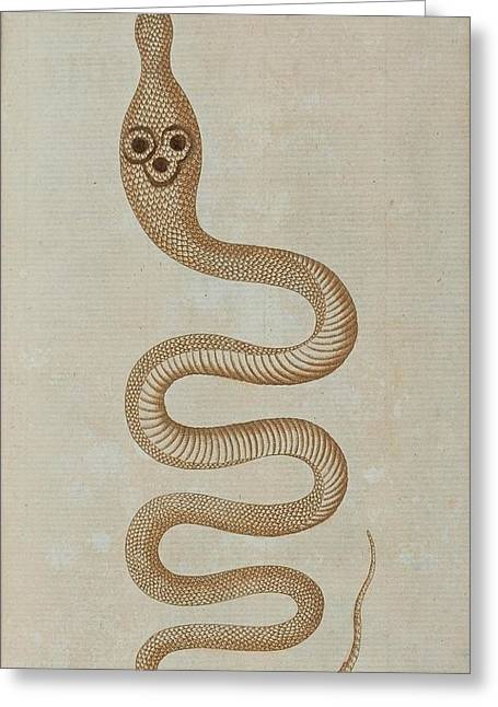 Whip-snake Greeting Cards - Dahls Whip Snake Greeting Card by Celestial Images