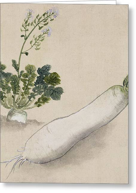 Radishes Greeting Cards - Daikon radish Greeting Card by Aged Pixel