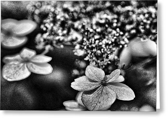 Black And White Images Mixed Media Greeting Cards - Dainty Black And White Greeting Card by Bellesouth Studio