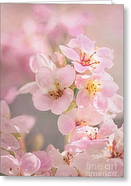 Texture Overlay Greeting Cards - Dainty Blossoms of Spring Greeting Card by Kaye Menner