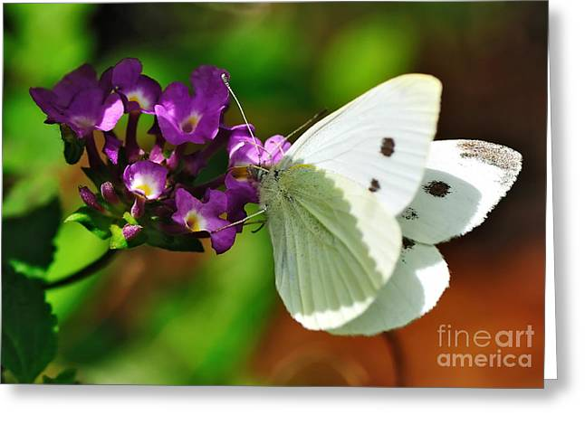 Butterfly On Flower Greeting Cards - Dainty Butterfly Greeting Card by Kaye Menner