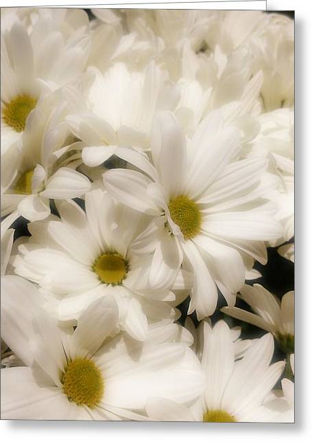 Bedroom Art Greeting Cards - Dainty Daisy  Greeting Card by Michelle Frizzell-Thompson