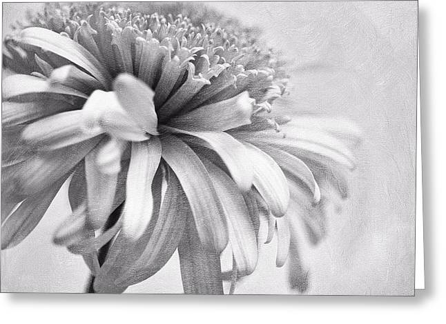 Dainty Daisy Greeting Card by Priska Wettstein