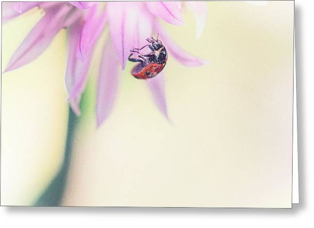 Ladybird Greeting Cards - Dainty Lady Greeting Card by Constance Fein Harding