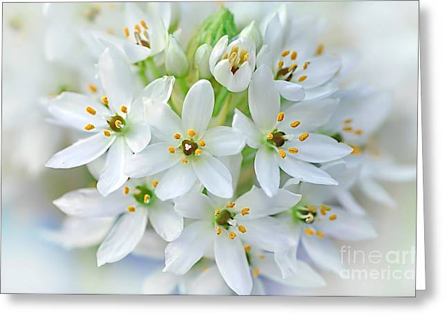 Star Of Bethlehem Greeting Cards - Dainty Spring Blossoms Greeting Card by Kaye Menner