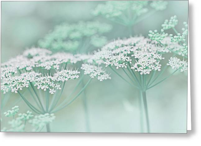 Pastel Green Greeting Cards - Dainty White Flowers Teal Greeting Card by Jennie Marie Schell