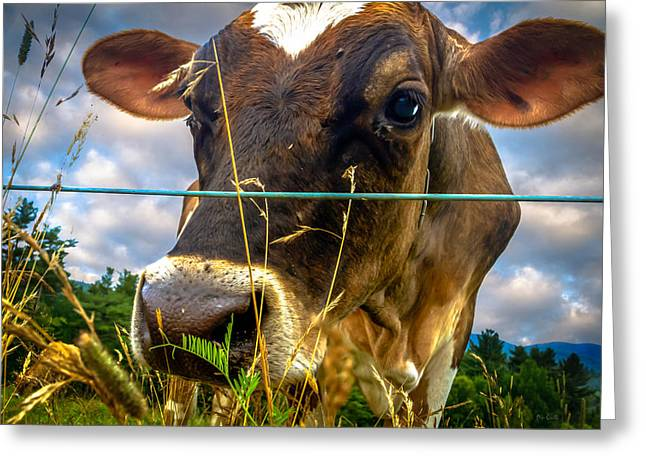 Cute Animal Portraits Greeting Cards - Dairy Cow Greeting Card by Bob Orsillo
